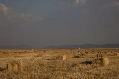Paille d'alpaga de pays photographie stock libre de droits