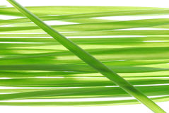 Paille de blé Images stock