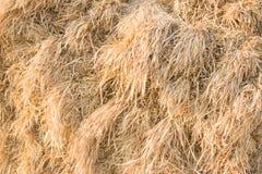 Paille de blé Photo libre de droits