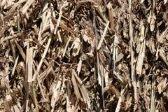 paille de maïs Image libre de droits