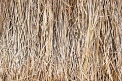 paille de riz Photo stock