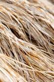 Paille de riz dans la ferme Photographie stock
