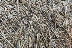 Paille naturelle sèche Image stock