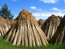 Paille pour les toits couverts de chaume Photo libre de droits