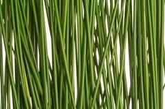 Pailles d'herbe verte Image libre de droits