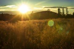 Pailles se baignant dans la lumière de coucher du soleil Images libres de droits