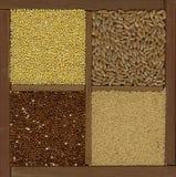Painço. soletrado, amaranto, grões do quinoa fotografia de stock royalty free