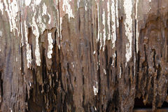 Painéis sujos da porta de Muddy Neglected Rotten Vintage Wooden Fotos de Stock