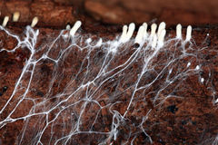 Pain étrange d'objet de l'espace de mycélium Photo stock
