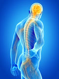 Pain in the back. A man having acute pain in the back royalty free illustration