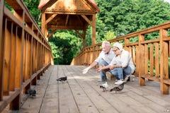 Pain de alimentation bienfaisant des deux personnes âgées aux pigeons en parc photo stock