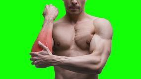 Pain in the elbow, muscular male body on green background, chroma key 4K video stock footage