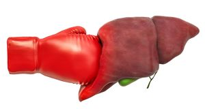 Free Pain In Liver, Liver Disease Concept. Human Liver With Boxing Gl Stock Images - 133510744