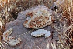 Pain sec sur la roche photos libres de droits