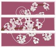 Painel artístico com as flores da flor de cereja Fotografia de Stock Royalty Free