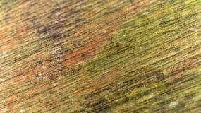 Painel de madeira velho colorido Foto de Stock Royalty Free