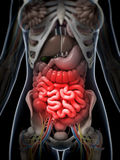 Painful belly. 3d rendered illustration of a painful belly Royalty Free Stock Photography