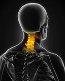 Painful Cervical Spine. Illustration. 3D render Stock Images