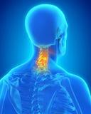 Painful Cervical Spine. Illustration. 3D render Stock Photo