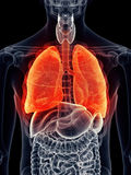 Painful lung Royalty Free Stock Image