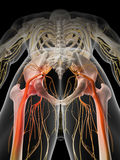 Painful sciatic nerve Stock Images