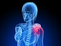 Painful shoulder. 3d rendered illustration of a female skeleton with highlighted shoulder Royalty Free Stock Photos