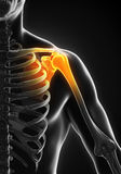 Painful Shoulder Illustration Royalty Free Stock Photos