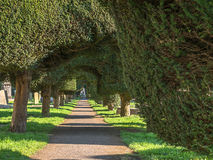 Painswick - St Mary's Yew Trees at Easter Time. View of the churchyard and Yew trees in Painswick Gloucestershire. The avenue of Yews lit by the morning sun royalty free stock photo