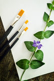 Paint brushes, flower and white paper Stock Image