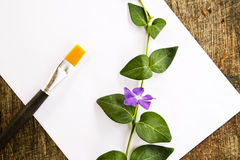 Paint brushes, flower and white paper Stock Photo