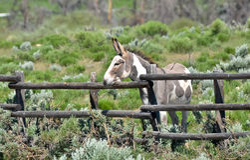 Paint Donkey Royalty Free Stock Photography