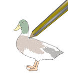 Paint duck Stock Images