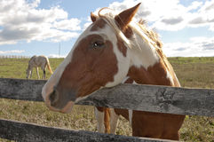 Paint Horse on a Farm. A beautiful paint horse behind a farm fence surrounded by a blue cloud filled sky stock image