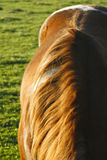 Abstract Crop of Paint Horse Mare In Field At Sunset Royalty Free Stock Photo