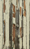The paint peeling off of the plank. Old paint wood, due to long-term exposure to wind and rain, lead to serious weathering, peeling paint, wood texture Stock Photo