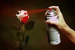 Paint the Roses Red. A woman spray paints a white rose red Stock Photography