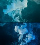 Paint spill abstract background. White paint spill flowing in blue water, abstract background, banner set Royalty Free Stock Photography
