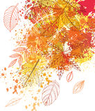 Paint splashes and autumnal leaves Royalty Free Stock Photography