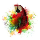 Paint Splatters of Maccaw Parrot on White Royalty Free Stock Photography