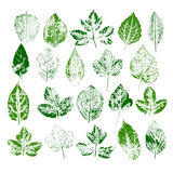 Paint stamps of different leaves set Stock Photo