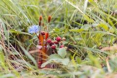 5 paintbrush, цикорий цветка и клубники в опарнике на th Стоковое Изображение