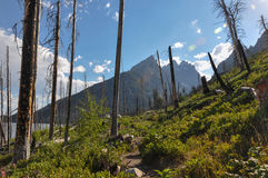 Paintbrush Canyon Trail in Grand Tetons National Park, Wyoming,. USA royalty free stock photos