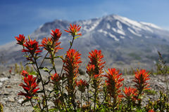 Paintbrush on Mt St Helens Royalty Free Stock Images
