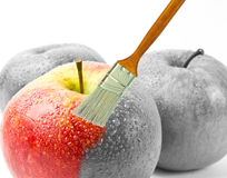 Paintbrush painting a fresh red wet apple which is partly black and white and partly colored Royalty Free Stock Photos