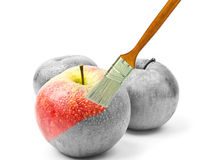 Paintbrush painting a fresh red wet apple which is partly black and white and partly colored Stock Images