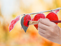 Paintbrush paints frozen leaves in red colour Royalty Free Stock Image