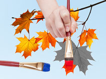 Paintbrush paints maple leaves in blue sky Stock Images