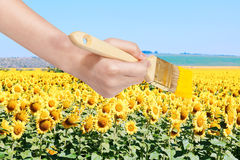 Paintbrush paints yellow field of sunflowers Stock Images