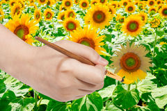 Paintbrush pants yellow petals of sunflower Stock Images