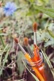 Paintbrushes в банке на предпосылке травы Стоковое Изображение